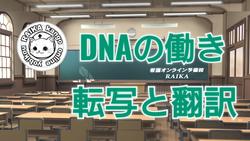 DNAの働き・転写と翻訳