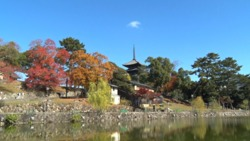[Video material] Scenery of Nara (Sarusawa Pond and Five-storied Pagoda)